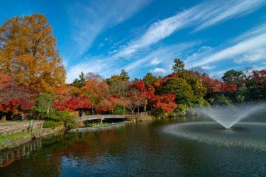 富山県10大紅葉スポット高岡古城公園