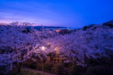 氷見市の桜景色パノラマ(朝日山公園・ふれあいの森・湊川)(2019/4)