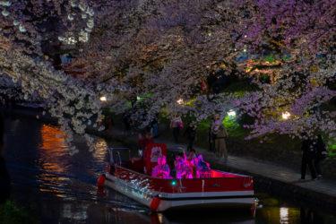 松川べり満開の桜と幽玄チンドン夜桜流し(2019/4/5)