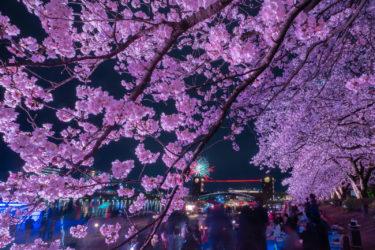 富岩運河環水公園の超満開の桜と花火(2019/4/6)