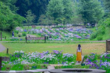 600品種70万株!砺波市頼成の森 花しょうぶ祭り2020