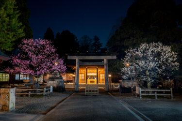 高岡古城公園梅林と射水神社の梅2021