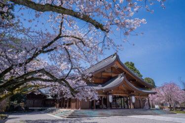 富山県護国神社の満開の桜2021