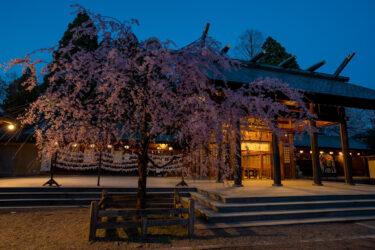 高岡古城公園と射水神社の夜桜ライトアップ2021