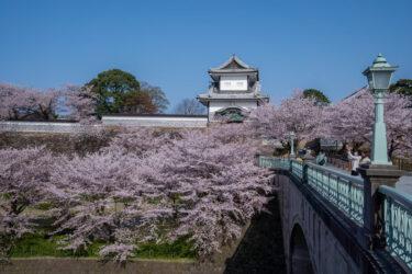 快晴下の金沢城公園の満開の桜2021