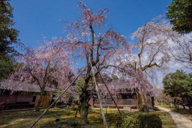 富山市「豪農の館内山邸」の梅と桜2021
